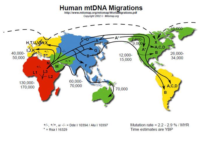 7267Human-mtDNA-migrations